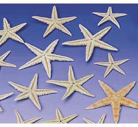 Real Starfish