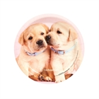 Glamour Dogs Dessert Plates (8)