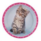 rachaelhale Glamour Cats Dinner Plates (8)